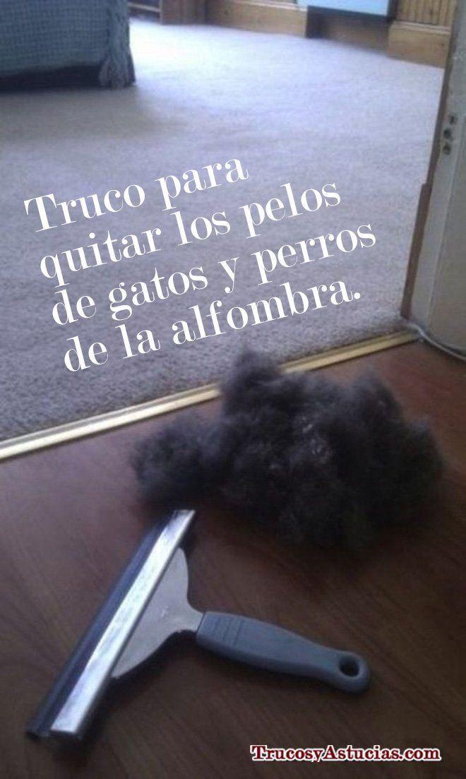 Quitar el pelo de gatos y perros de la alfombra