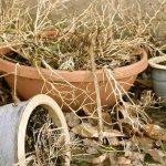 Cómo regar las plantas en vacaciones: 3 trucos