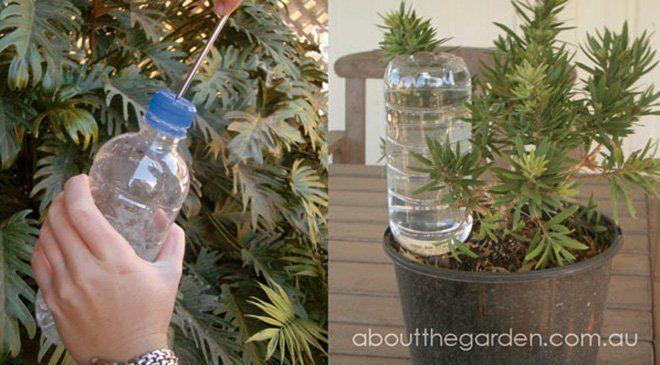 Cómo regar plantas en vacaciones: con gota a gota