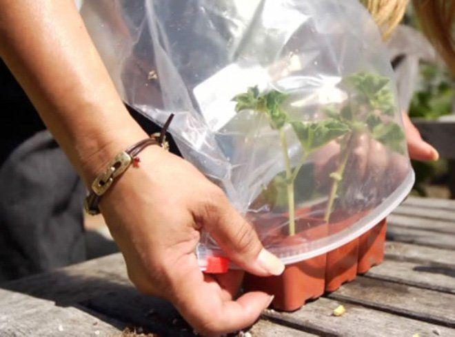 Cómo regar plantas en vacaciones: con efecto invernadero