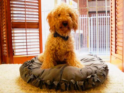 cómo hacer un colchón para perro sin coser