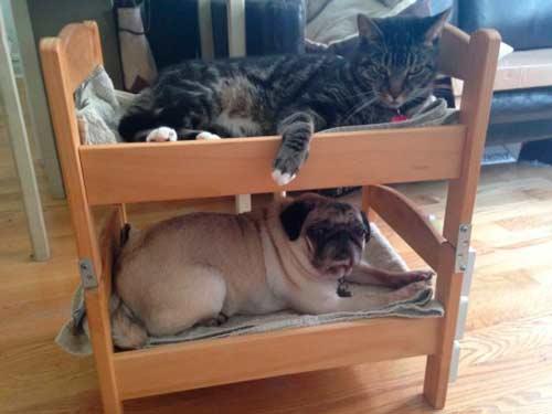 cómo hacer una litera para mascotas