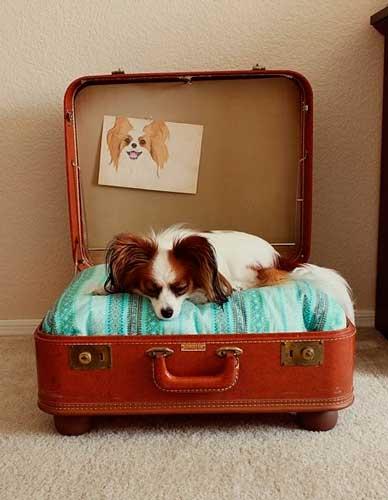 cómo hacer camas para perro pequeño con una maleta
