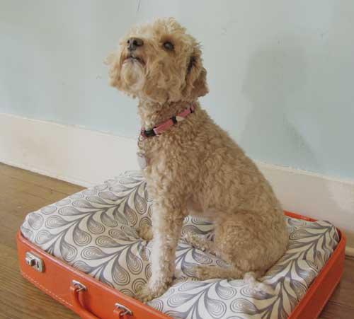 cómo hacer una cama para perro con una maleta vintage