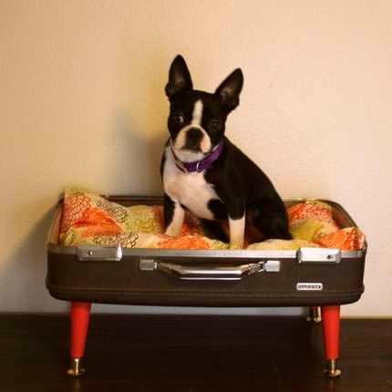 cómo hacer una cama para perro con una maleta antigua