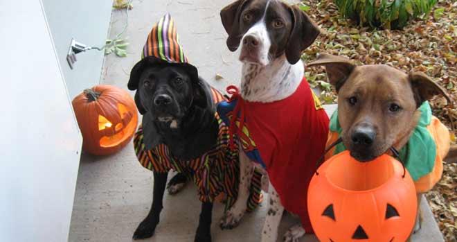 disfraces-populares-halloween-perros-2016