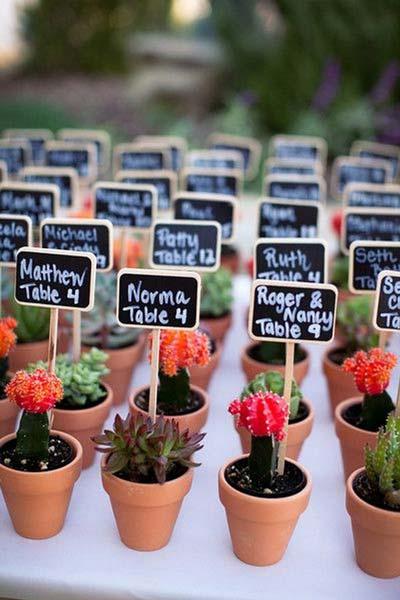 idea original de marcasitios con cactus miniatura y pizarras