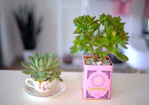 plantas pequeñas para mesa de oficina original