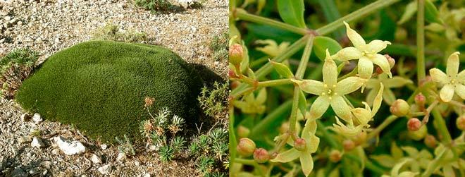 plantas autóctonas de mallorca y cabrera