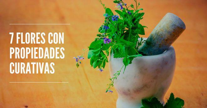 propiedades sanadoras y terapeuticas de flores comunes