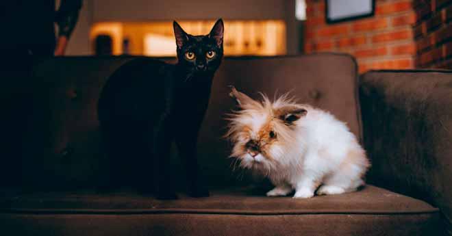 truco para limpiar orina o pipí de gato, perro, conejo